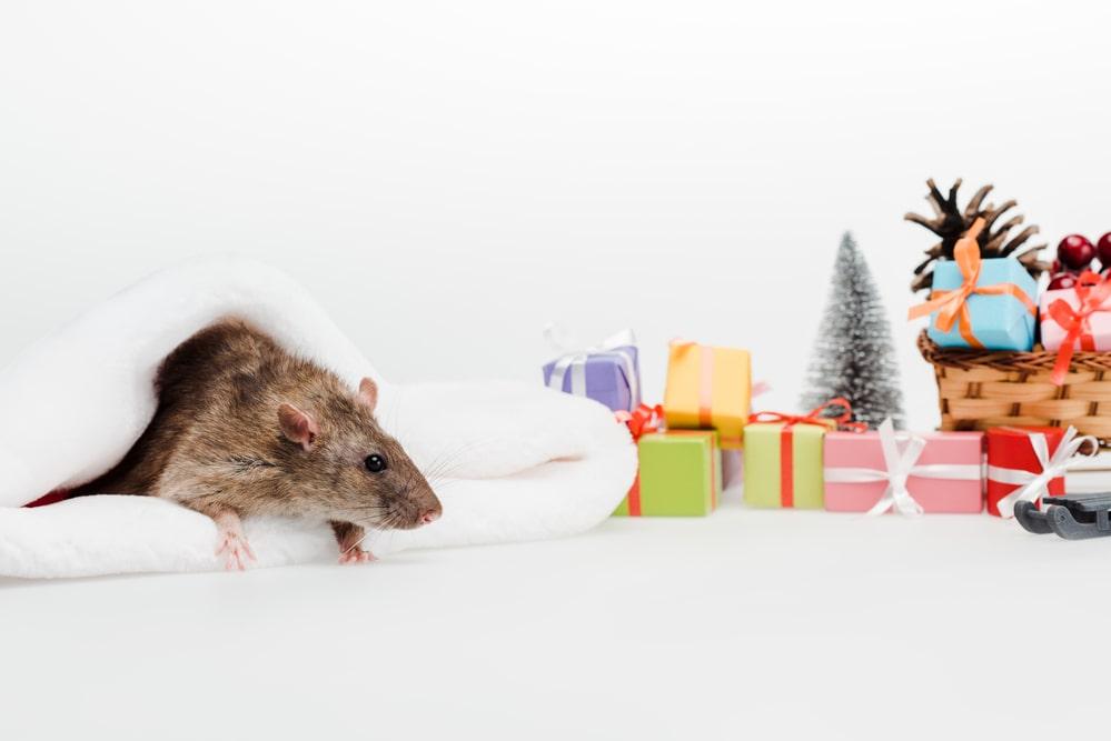Homemade Mice Toys 63